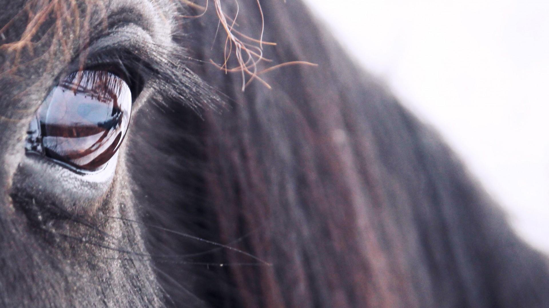 Training en coaching met paarden
